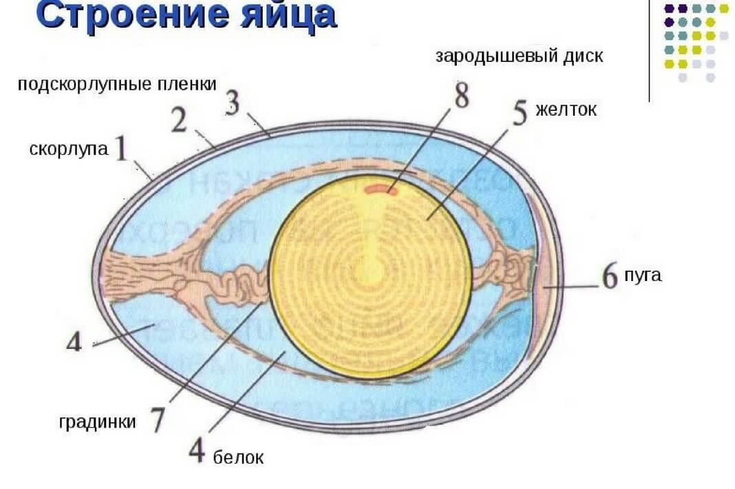 яичная скорлупа