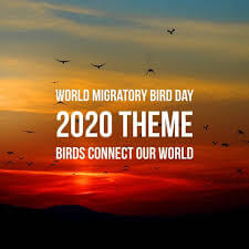 world migratory bird day 2020 -Bankersdaily | Race Institute