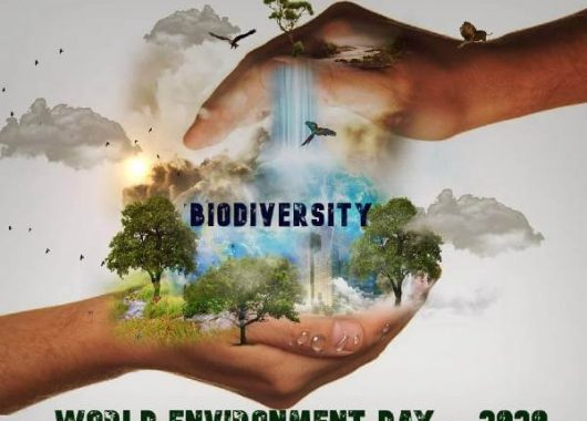 World-Environment-day-5