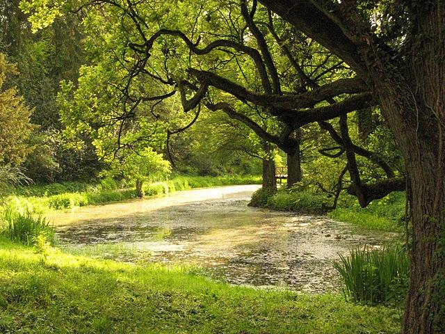 Arboretum Simeria arbori beready.ro