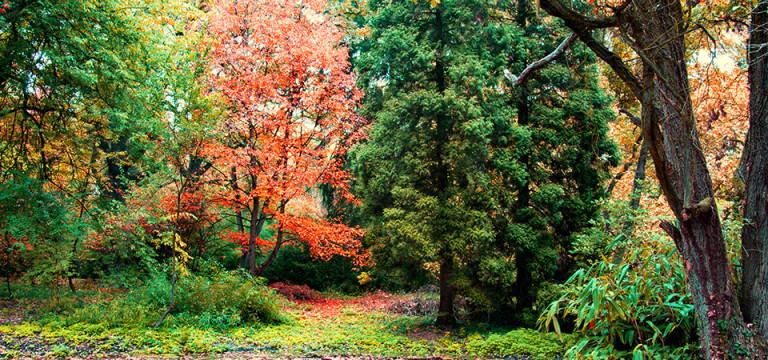 Arboretum Simeria beready.ro