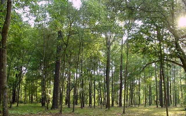 Pădurea Bejan beready.ro Deva