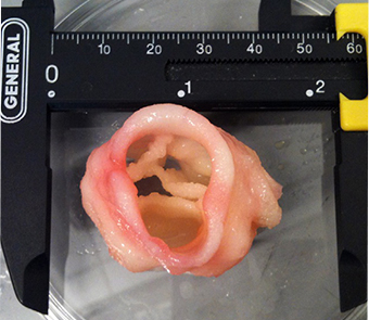 3d bioprint