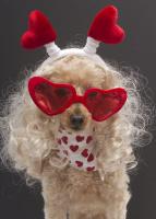 Dating dog