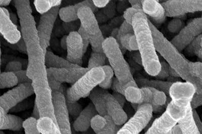 TMV-nanostructures-close-crop