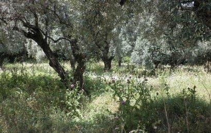 Skopelos - zelený ostrov