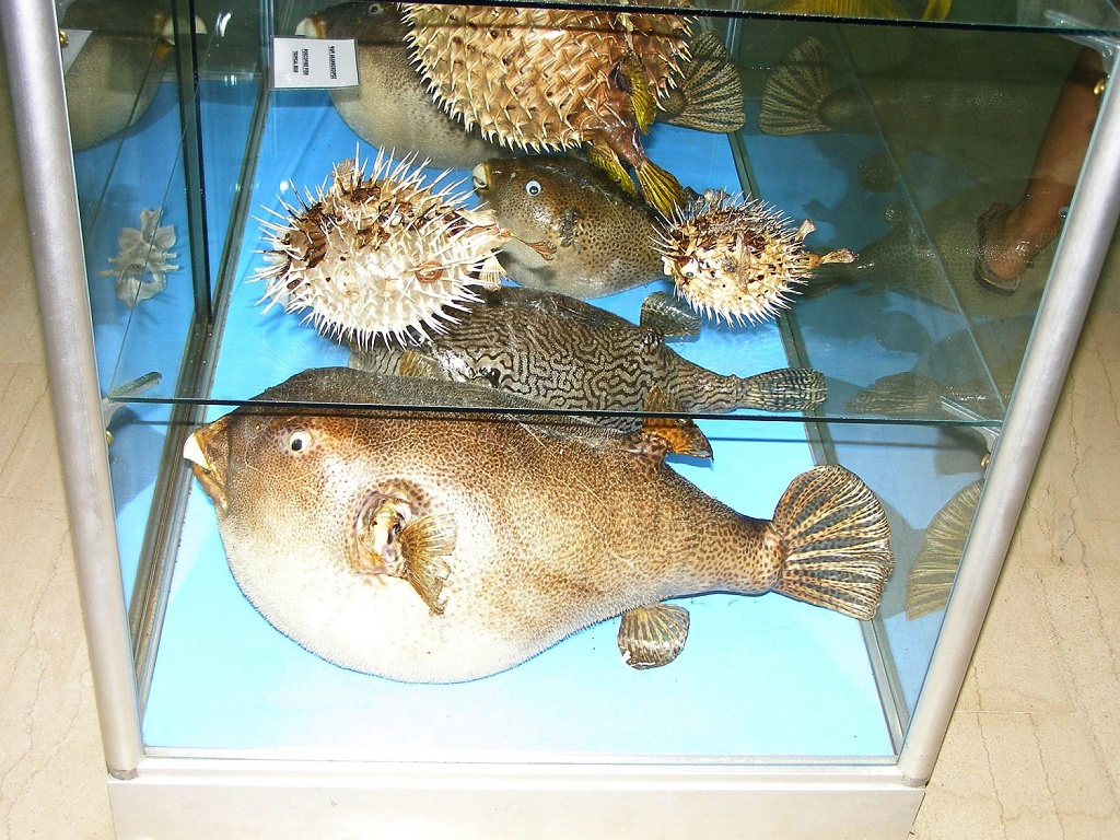 Muzeum lastur v Benitses 001