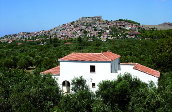 Anemona vila