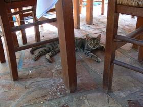 Agia Fotini - kočička