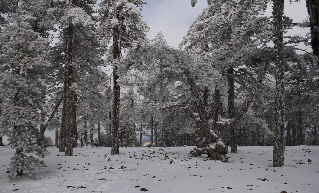 Troodos_in_winter,_Cyprus