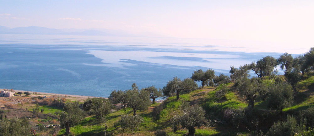 Our-family-Olive-Grove