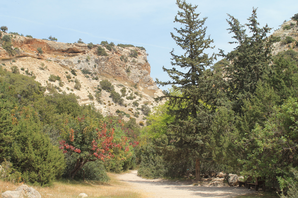 Avakas-Gorge-Nature-Trail_4