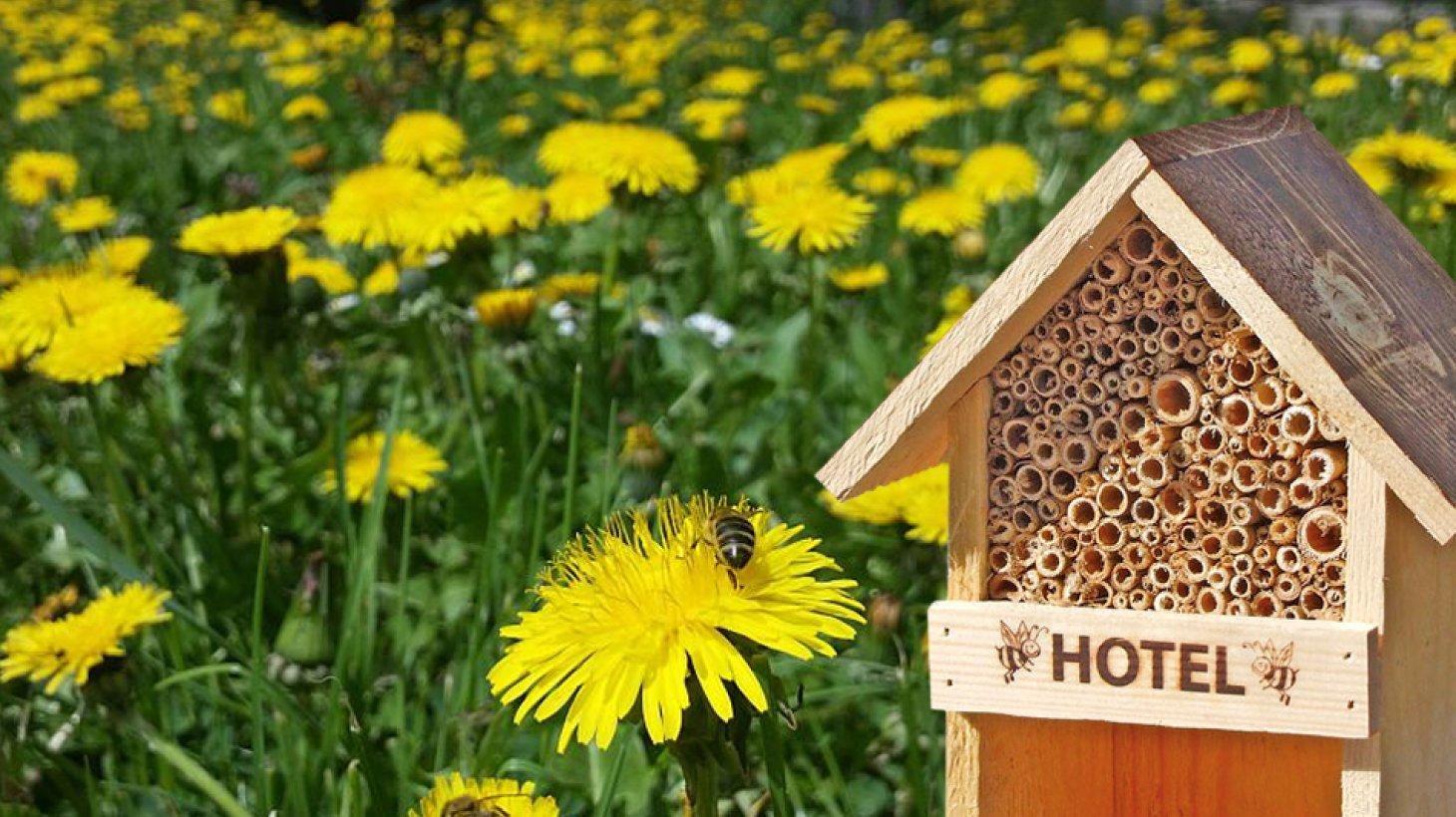 Zonnebloemenveld met bijenhuisje