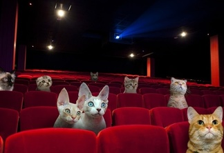 Cat cinema good