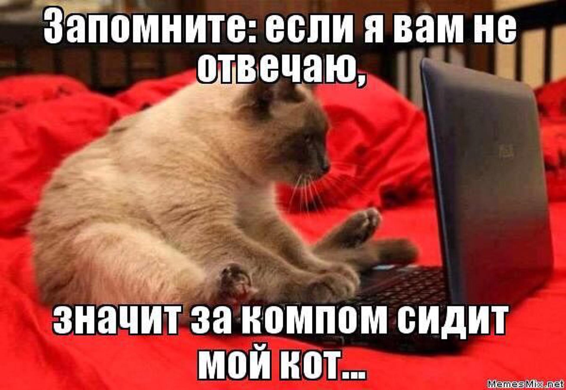 Статус если меня нет в интернете