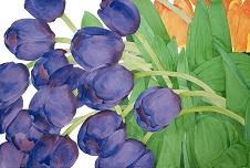 Gary bukovnik  paarse tulpen  aquarel  102 x 153 cm.