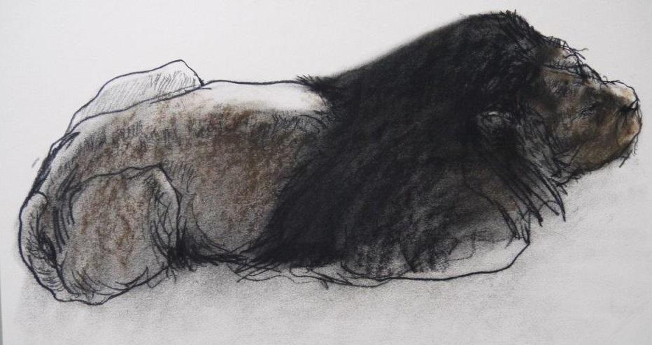 Jan van der kooi  leeuw