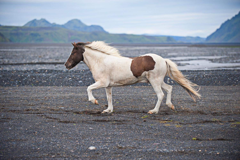 Auch Pferde können Hü, hott. Foto: Unsplash/Robin Arm