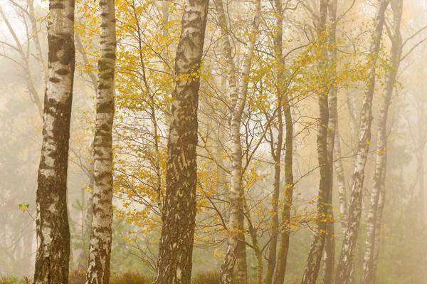 Sallandse Heuvelrug _ wandelroute Roots