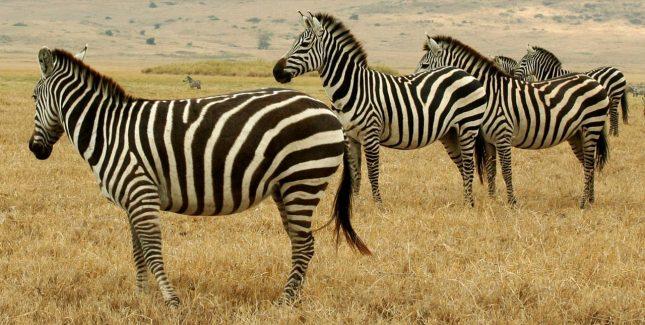 1280px-tanzanian_animals