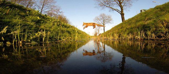 amsterdam-wildlife-1200x525