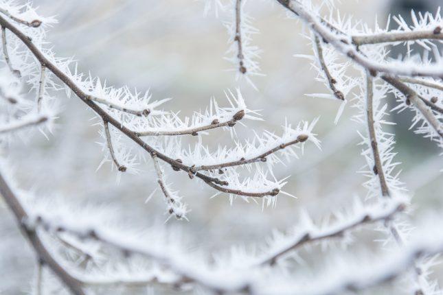 elmigo_1370_20170118_winter