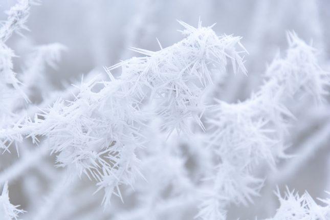 elmigo_1371_20170118_winter