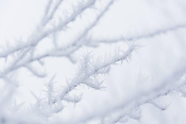 elmigo_1383_20170118_winter