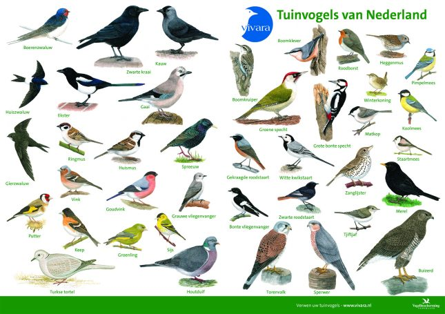 ID charts_A3 vogel.indd
