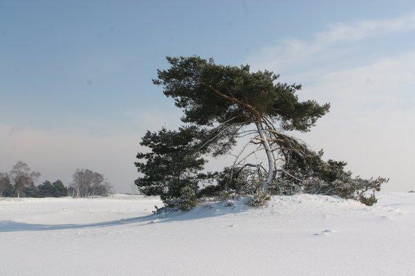 het-park-prima-toegankelijk-ook-met-sneeuw_423