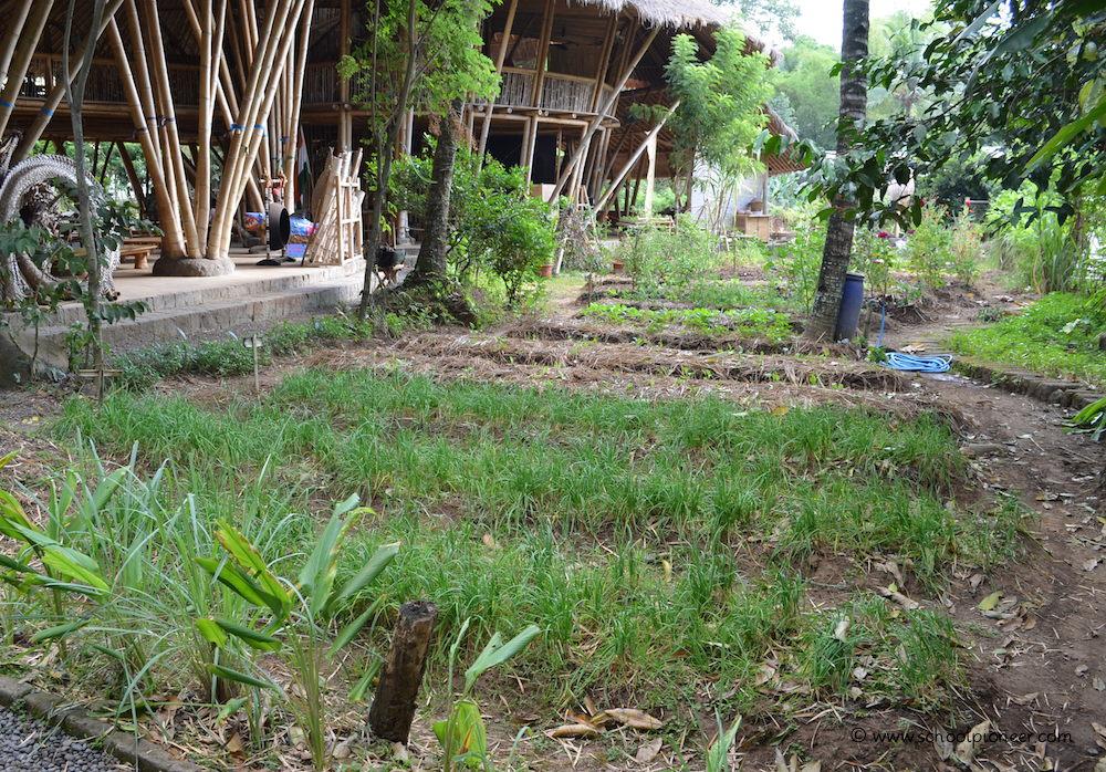 Organischer-Garten-an-der-Green-School-Bali