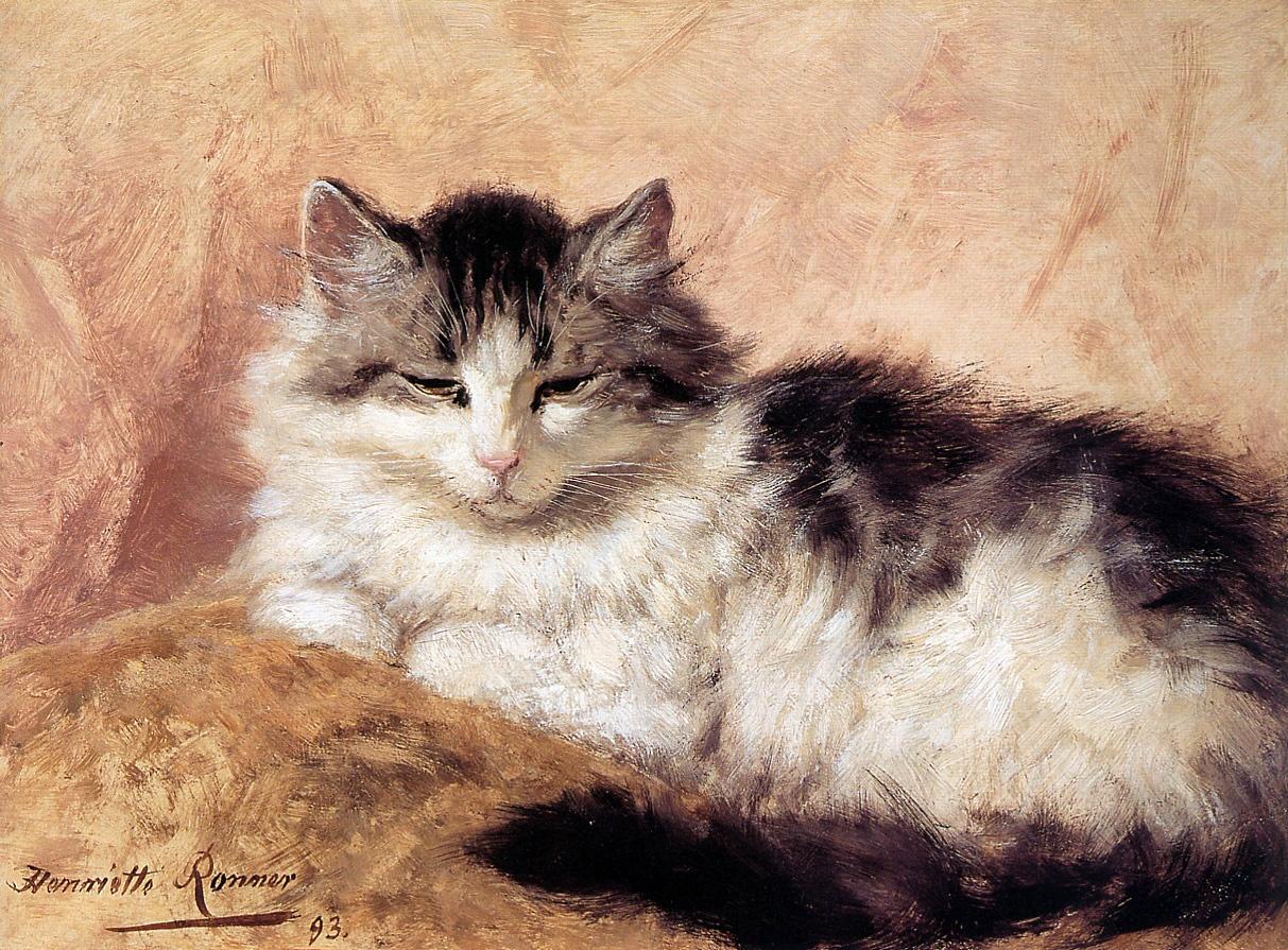 1313674347_dozing-cat_www.nevsepic.com.ua