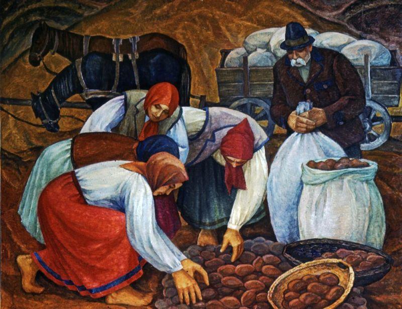 збір картоплі