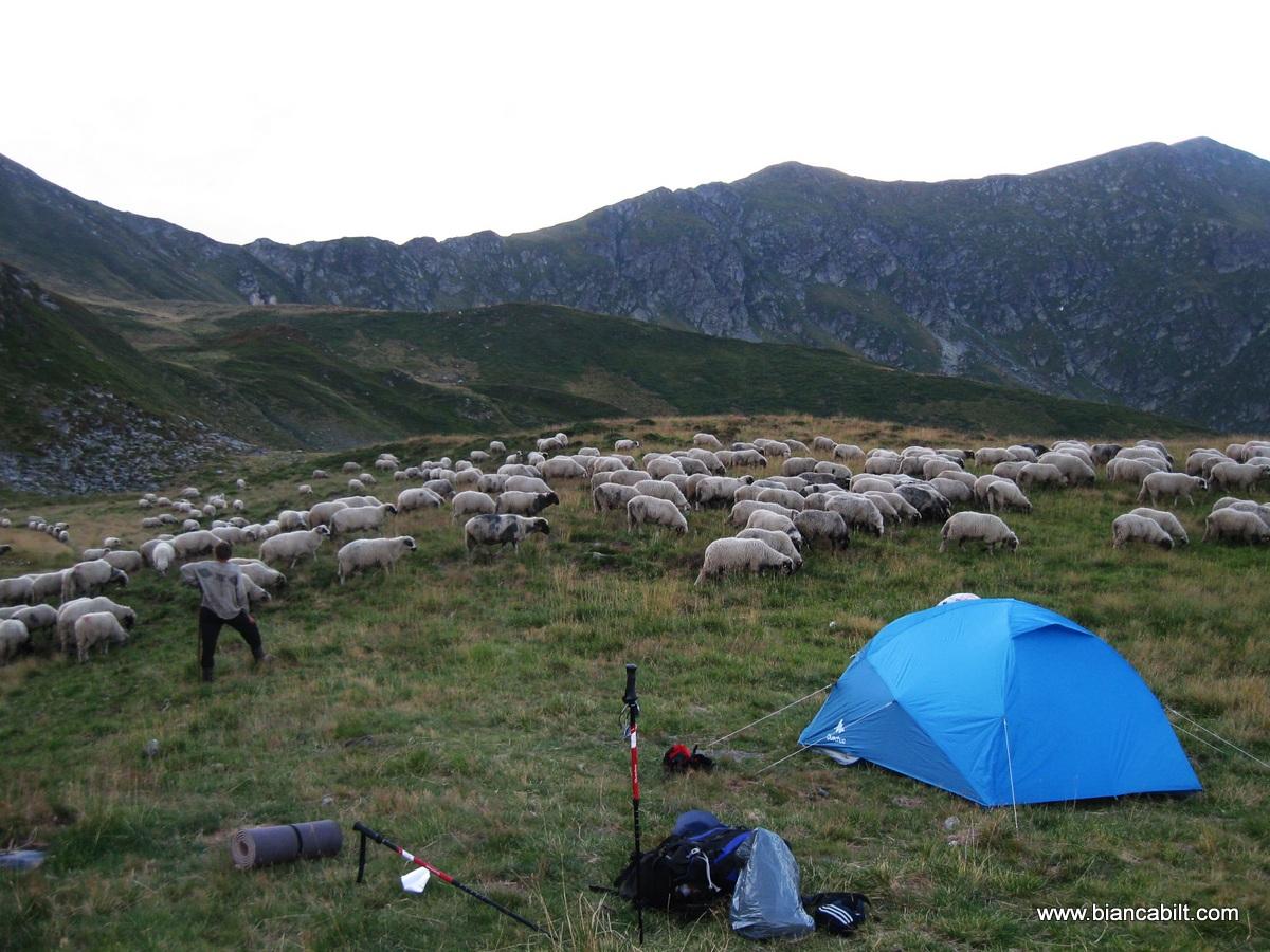 A 2a noapte am campat sub Vârfurile Buhăescu, într-un loc unde era plin de străini din toate colțurile Europei.