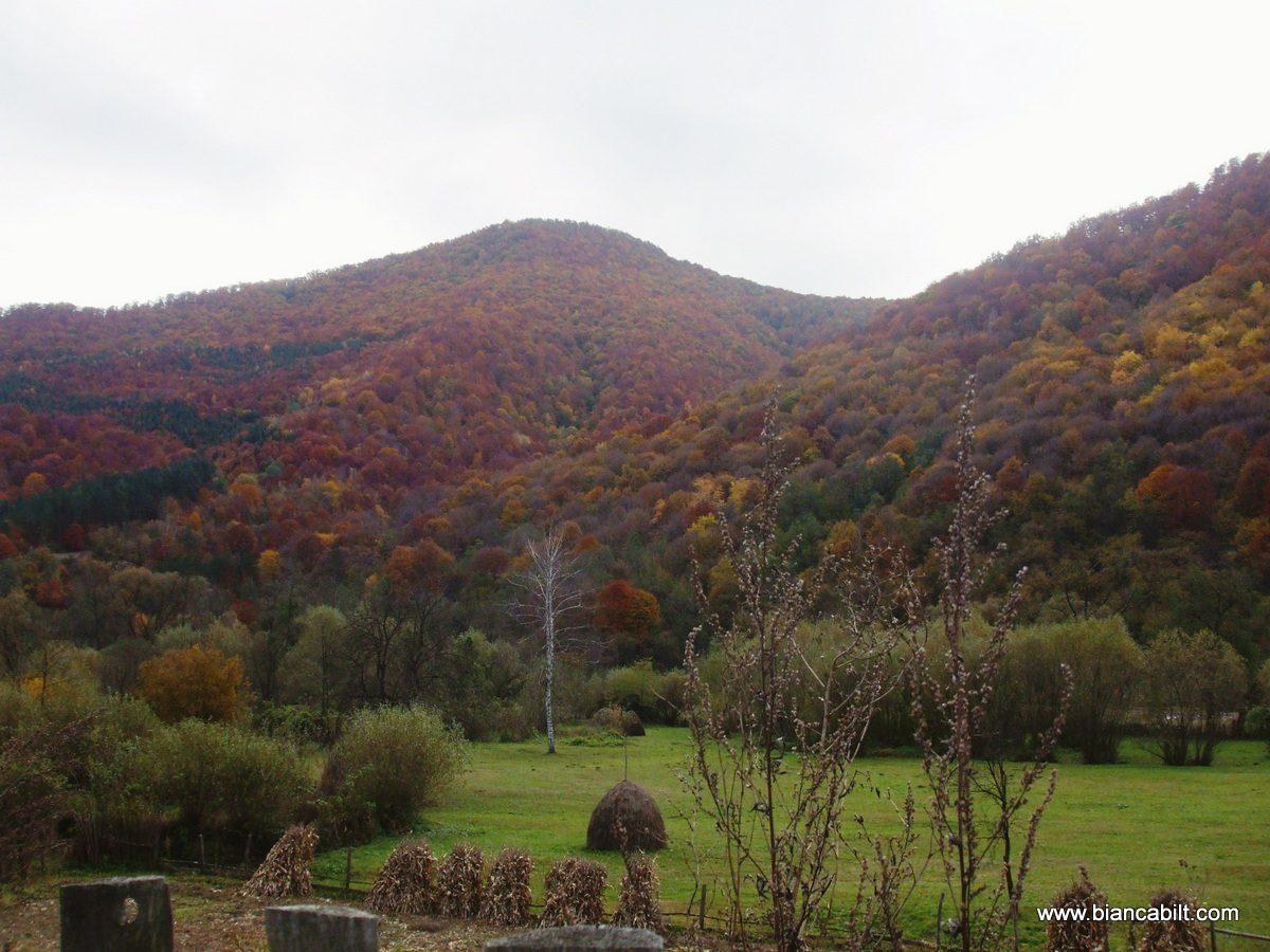 Trecem pe lângă păduri și câmpuri aurii. Totul e superb.