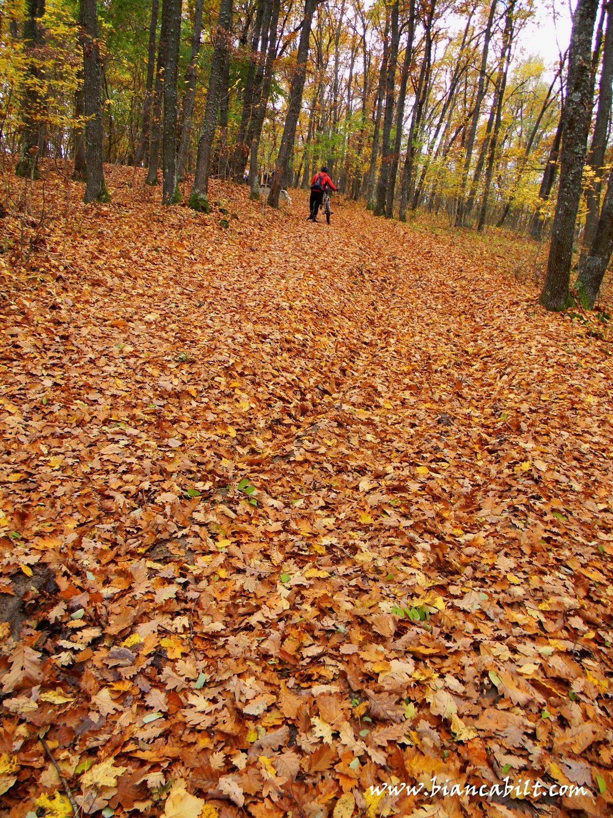 Urmează o urcare prin pădure...susținută dar super drăguță, genul de urcări pe care eu le ador. Păcat că la un moment a trebuit să mă dau jos căci era un teren mult pre accidentat și cu prea mult noroi să mă lase să continui, dar nu a ținut mult.