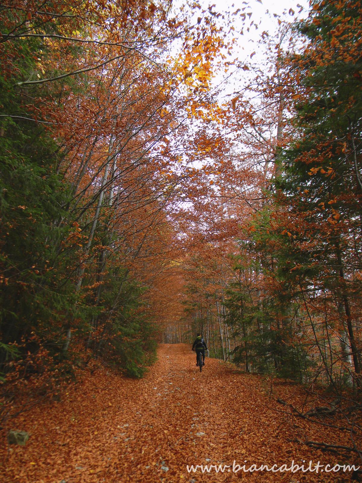 Pădurea asta e genială, zău! Am prins momentul perfect al toamnei.