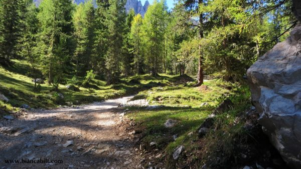 După câțiva km de Cortina, așa începe să se contureze traseul, o urcare în care mi-am dat sufletul, care nu se mai termina.