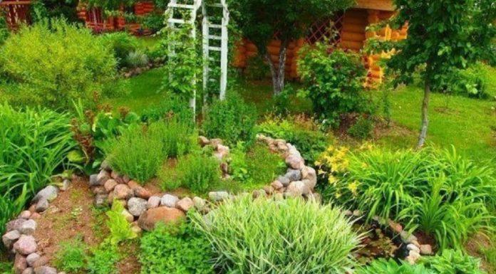 Полезнейшие советы от опытных садоводов-огородников