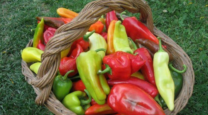 Супер урожай перца — 9 «работающих» советов!