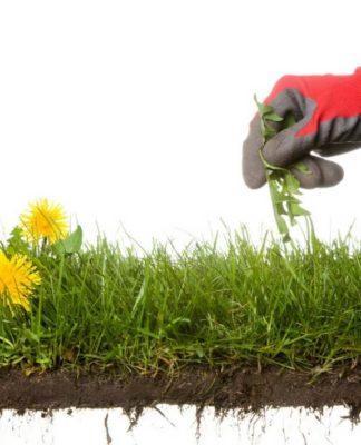 Он полил землю в саду уксусом…