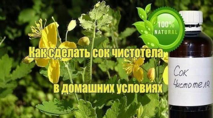 Лечение чистотелом - русским женьшенем