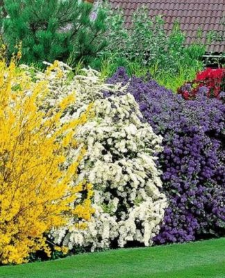 Выбираем кусты для живой изгороди