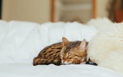 Una semplice tecnica per dormire