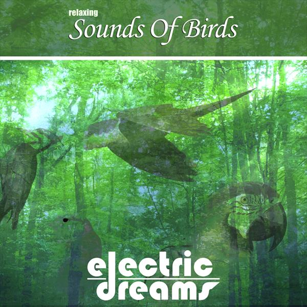 Relaxing Sounds Of Birds | Record Union
