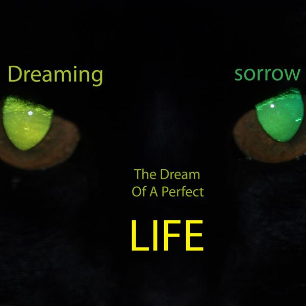 Dream Of A Perfect Life