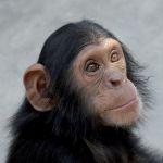 Leiderschap door na-apen