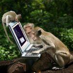 Arbo is geen monkey business