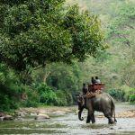 Leren een olifant te evacueren