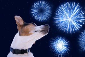 BOA maakt zich zorgen over vuurwerkverbod